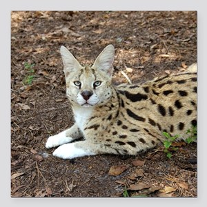 "serval 026 Square Car Magnet 3"" x 3"""