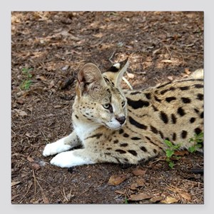 "serval 027 Square Car Magnet 3"" x 3"""