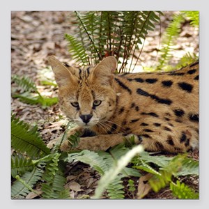 "serval 029 Square Car Magnet 3"" x 3"""