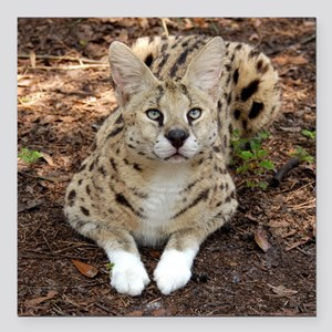 "serval 028 Square Car Magnet 3"" x 3"""