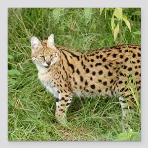 "serval 030 Square Car Magnet 3"" x 3"""