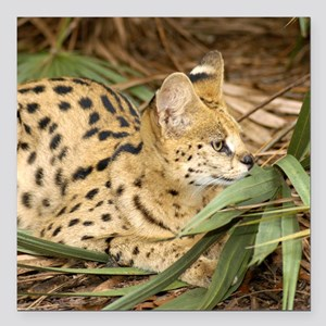 "serval 031 Square Car Magnet 3"" x 3"""