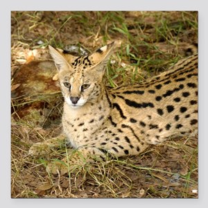 "serval 033 Square Car Magnet 3"" x 3"""
