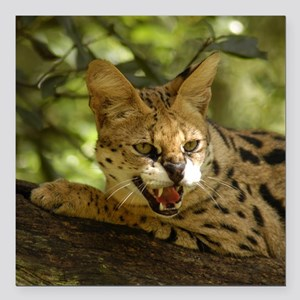 "serval 036 Square Car Magnet 3"" x 3"""