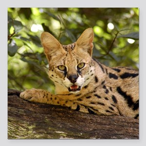 "serval 037 Square Car Magnet 3"" x 3"""