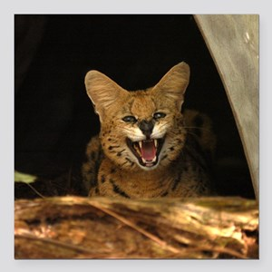 "serval 040 Square Car Magnet 3"" x 3"""