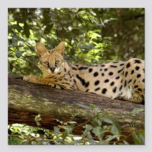 "serval 038 Square Car Magnet 3"" x 3"""