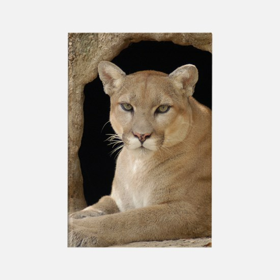 Cougar 014 Rectangle Magnet