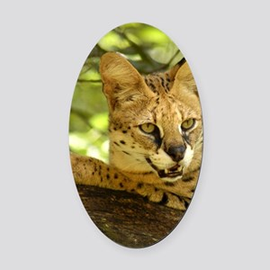 serval 010 Oval Car Magnet