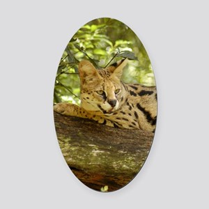 serval 011 Oval Car Magnet