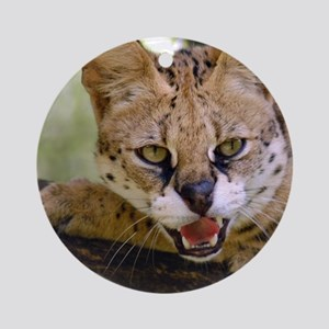 serval 013 Round Ornament