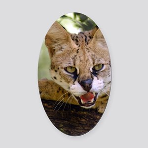 serval 013 Oval Car Magnet