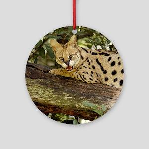 serval 014 Round Ornament