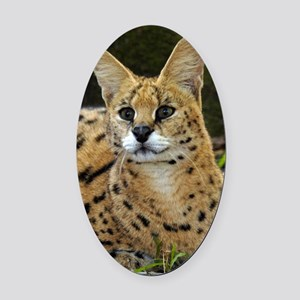 serval 015 Oval Car Magnet