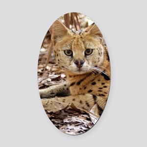 serval 025 Oval Car Magnet