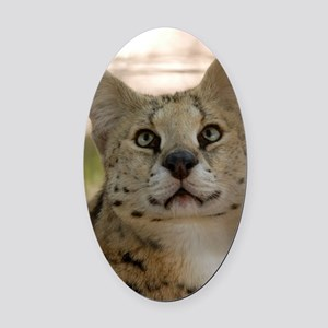 serval 017 Oval Car Magnet