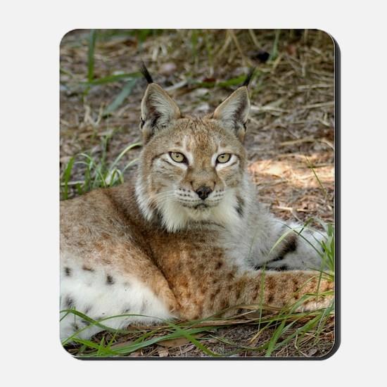 siberian lynx 015 Mousepad