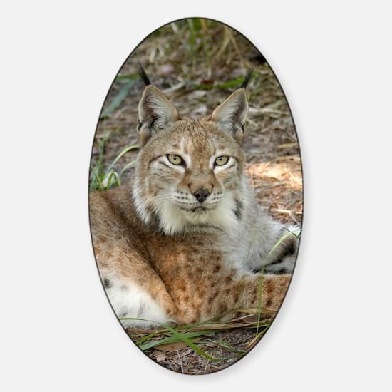 siberian lynx 015 Sticker (Oval)