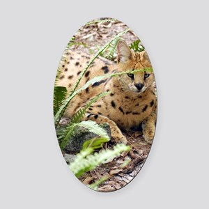 serval 047 Oval Car Magnet