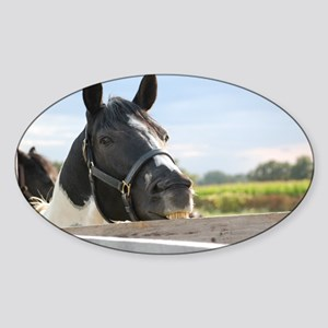 HORSE-CHEWING Sticker (Oval)