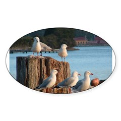 Seagulls Oval Decal