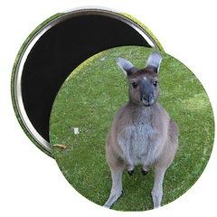 Baby Kangaroo 2.25