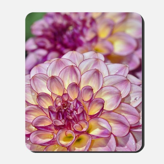 Beautiful pink dahlia flowers Mousepad