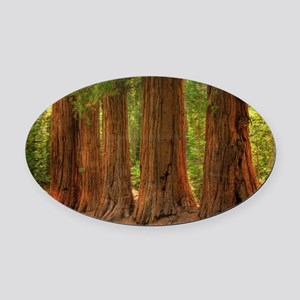 SEQUOIA Oval Car Magnet
