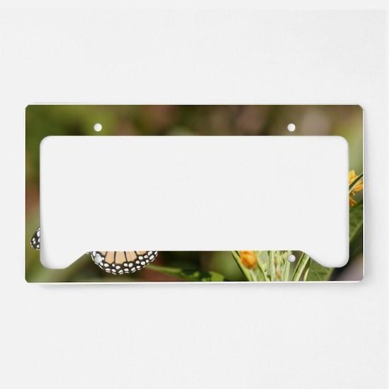 IMG_8456 License Plate Holder
