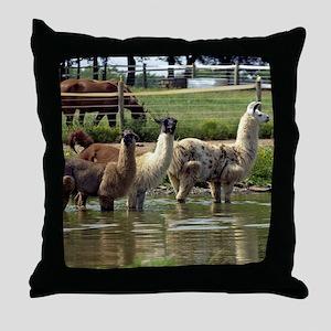 llamatrio1_calendar Throw Pillow