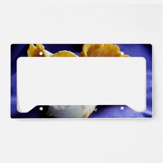 ChanterelleToo License Plate Holder