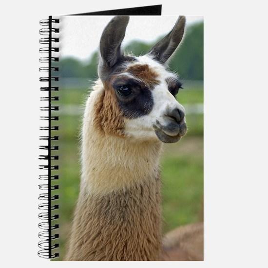 llama2_lp Journal