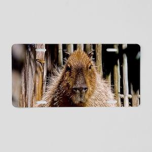 (1) Capybara Staring Aluminum License Plate