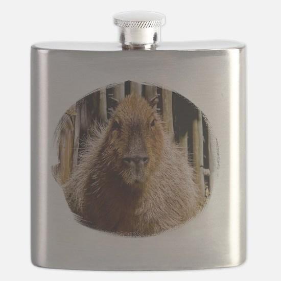 (16) Capybara Staring Flask