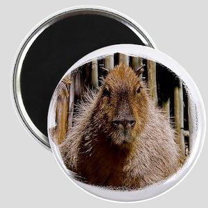 (16) Capybara Staring Magnet
