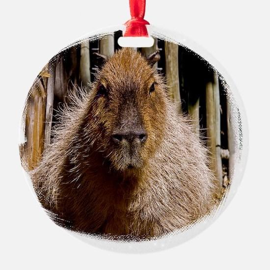 (16) Capybara Staring Ornament
