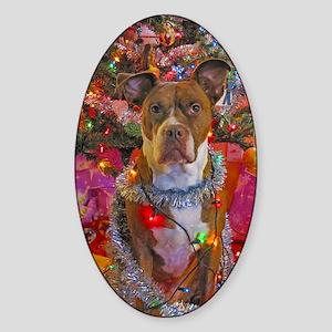 pitbull christmas card Sticker (Oval)