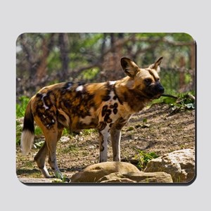 (2) African Wild Dog  1932 Mousepad