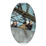 Marmoset Single