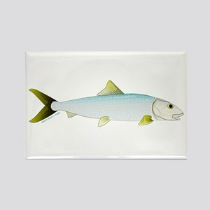 Bonefish Magnets