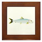 Bonefish Framed Tile