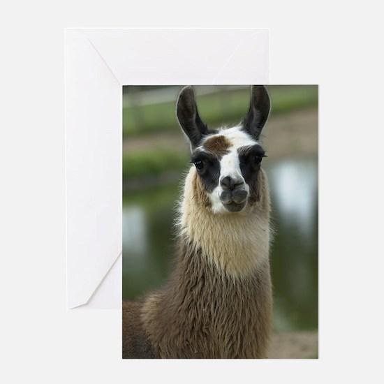 llama1_lp Greeting Card