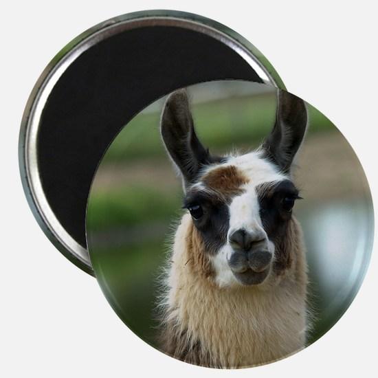 llama1_rnd Magnet