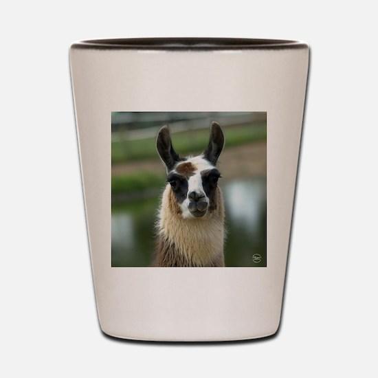 llama1_rnd Shot Glass