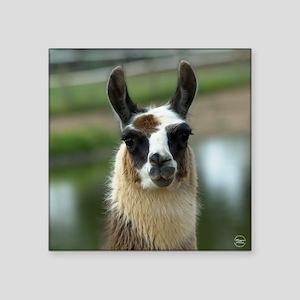 "llama1_rnd Square Sticker 3"" x 3"""