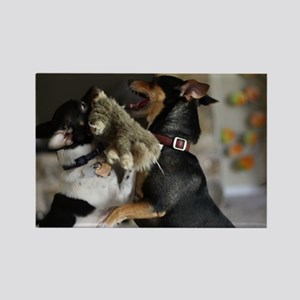 Playful Rat Terrier Dogs Rectangle Magnet