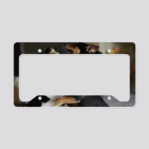 Playful Rat Terrier Dogs License Plate Holder