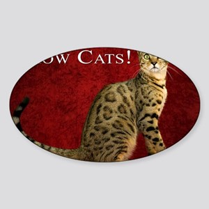 Show Cats Cover Sticker (Oval)