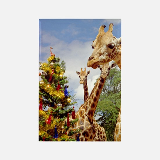 giraffe4cropsmall Rectangle Magnet
