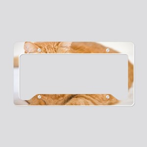 Orange Cat License Plate Holder